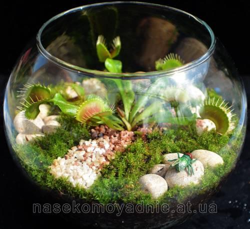 Флорариум (Florarium)